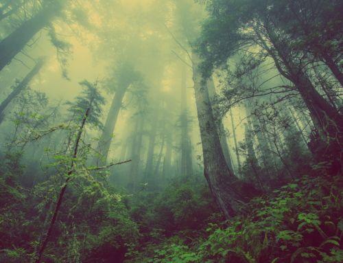 Brüder im Nebel oder Täter in Watte?